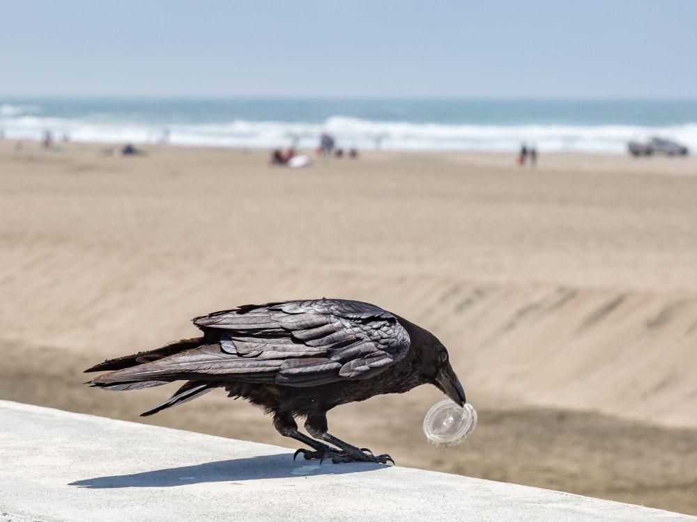ptak z plastikiem